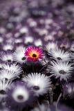 De kleurrijke achtergrond van bloemen met selectieve kleur Royalty-vrije Stock Afbeeldingen