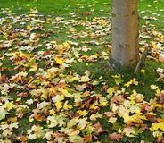 De kleurrijke Achtergrond van de Bladeren van de Herfst Royalty-vrije Stock Foto's