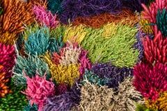 De kleurrijke Achtergrond van de Bloem Stock Afbeeldingen