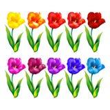 De kleurrijke Achtergrond van de Bloem Vector illustratie Stock Fotografie