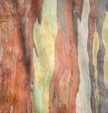 De kleurrijke achtergrond van de boomschors Stock Fotografie