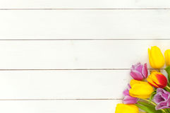 De kleurrijke achtergrond van de lentetulpen Stock Foto