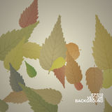 De kleurrijke achtergrond van de herfstbladeren Stock Foto's