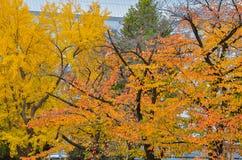 De kleurrijke achtergrond van het esdoornblad in de herfst Stock Fotografie