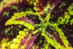 De kleurrijke bladeren Royalty-vrije Stock Afbeelding