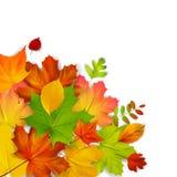 De kleurrijke Bladeren van de Herfst Stock Fotografie