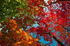 De kleurrijke bladeren van de herfst Royalty-vrije Stock Fotografie