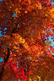 De kleurrijke bladeren van de herfst Royalty-vrije Stock Foto's