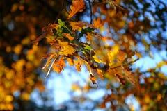 De kleurrijke Bladeren van de Herfst stock foto