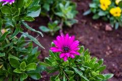 De kleurrijke bloem Stock Afbeeldingen
