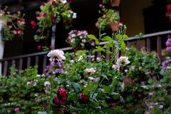 De kleurrijke bloemen in een bloemrijk milieu met unfocused achtergrond royalty-vrije stock foto's