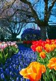 De kleurrijke bloemen van de de lentetuin Stock Fotografie