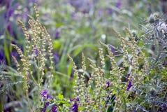 De kleurrijke bloemen van een bank van de stroom royalty-vrije stock foto