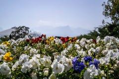 De Kleurrijke Bloemen van Turkije Antalya royalty-vrije stock foto's