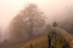 De kleurrijke bomen van de Herfst Stock Afbeeldingen