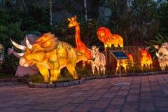 De kleurrijke dieren in nacht Stock Afbeeldingen