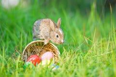 De kleurrijke eieren op weide en weinig konijn springen op de zonnige aard van het mandnest stock fotografie