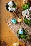 De kleurrijke Eieren van de Kwartels van Pasen Royalty-vrije Stock Afbeeldingen