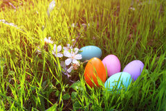 de kleurrijke eieren van Pasen op het groene gras Stock Afbeelding