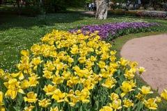 De kleurrijke en geschakeerde tulpen bloeit in de botanische tuin van Villa Taranto in Pallanza, Verbania, Italië royalty-vrije stock afbeelding