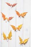 De kleurrijke esdoorn doorbladert Stock Foto