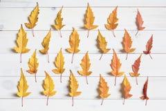 De kleurrijke esdoorn doorbladert Royalty-vrije Stock Foto's