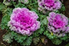 De kleurrijke groenten Royalty-vrije Stock Foto