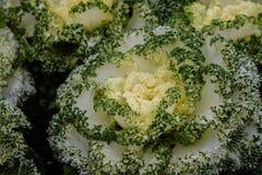De kleurrijke groenten in de tuin Stock Foto's