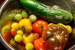 De kleurrijke Groenten van de Herfst stock fotografie