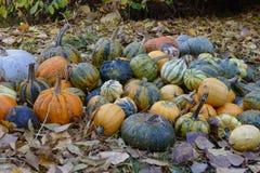 De kleurrijke Halloween pompoenen van Nice aan de grond Stock Fotografie