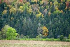 De kleurrijke helling van Quebec royalty-vrije stock fotografie
