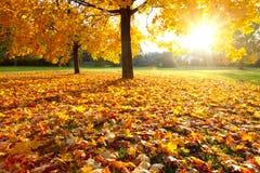 De kleurrijke herfst Stock Foto's