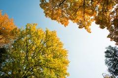 De kleurrijke herfst Royalty-vrije Stock Foto's