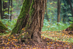 De kleurrijke Herfst Royalty-vrije Stock Fotografie
