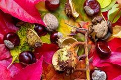De kleurrijke Herfst Stock Afbeelding