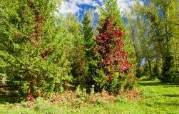 De kleurrijke Herfst Royalty-vrije Stock Afbeeldingen