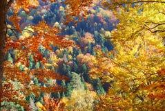 De kleurrijke Herfst Stock Foto