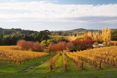 De kleurrijke herfst in Adelaide Hills-wijngebied Royalty-vrije Stock Afbeeldingen