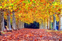 De kleurrijke Herfst bij Shinjuku-Park royalty-vrije stock foto