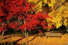 De kleurrijke herfst in de botanische tuin Stock Foto's