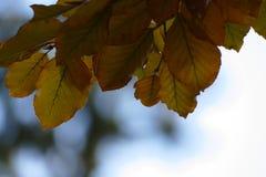De kleurrijke herfst doorbladert op takje Royalty-vrije Stock Afbeeldingen