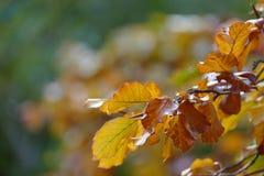 De kleurrijke herfst doorbladert op takje Stock Foto