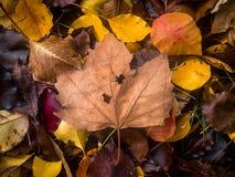 De kleurrijke herfst gaat ter plaatse weg Royalty-vrije Stock Afbeeldingen