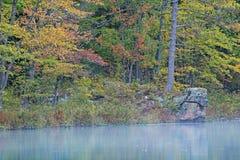 De kleurrijke herfst in het bos royalty-vrije stock foto