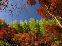 De kleurrijke herfst in Japan Stock Fotografie