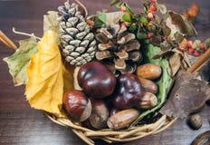 De kleurrijke herfst met bladeren, denneappels, kastanjes en eikel Stock Afbeeldingen