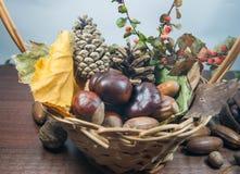 De kleurrijke herfst met bladeren, denneappels, kastanjes en eikel Stock Foto's