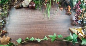 De kleurrijke herfst met bladeren, denneappels, kastanjes, noot en acor Stock Foto's