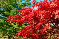 De kleurrijke Herfst in Park, Toronto, Canada Stock Foto