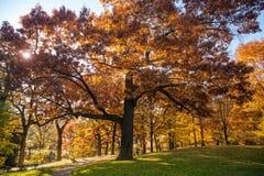 De kleurrijke Herfst in Park, Toronto, Canada Royalty-vrije Stock Foto